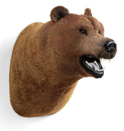 MWT-04 Lifesize Grizzly Bear Wall Head