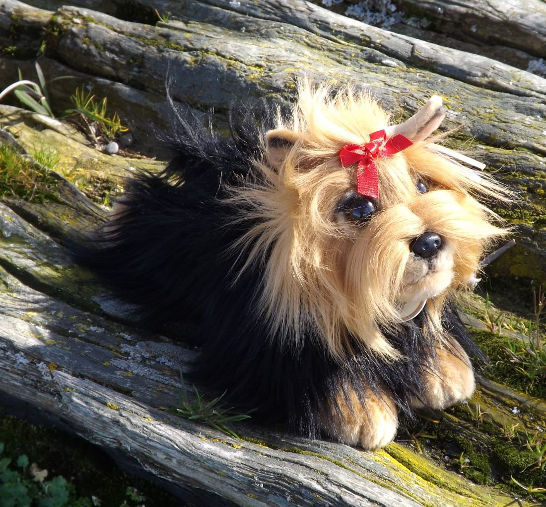 A10839-Plush-Yorkshire-Terrier