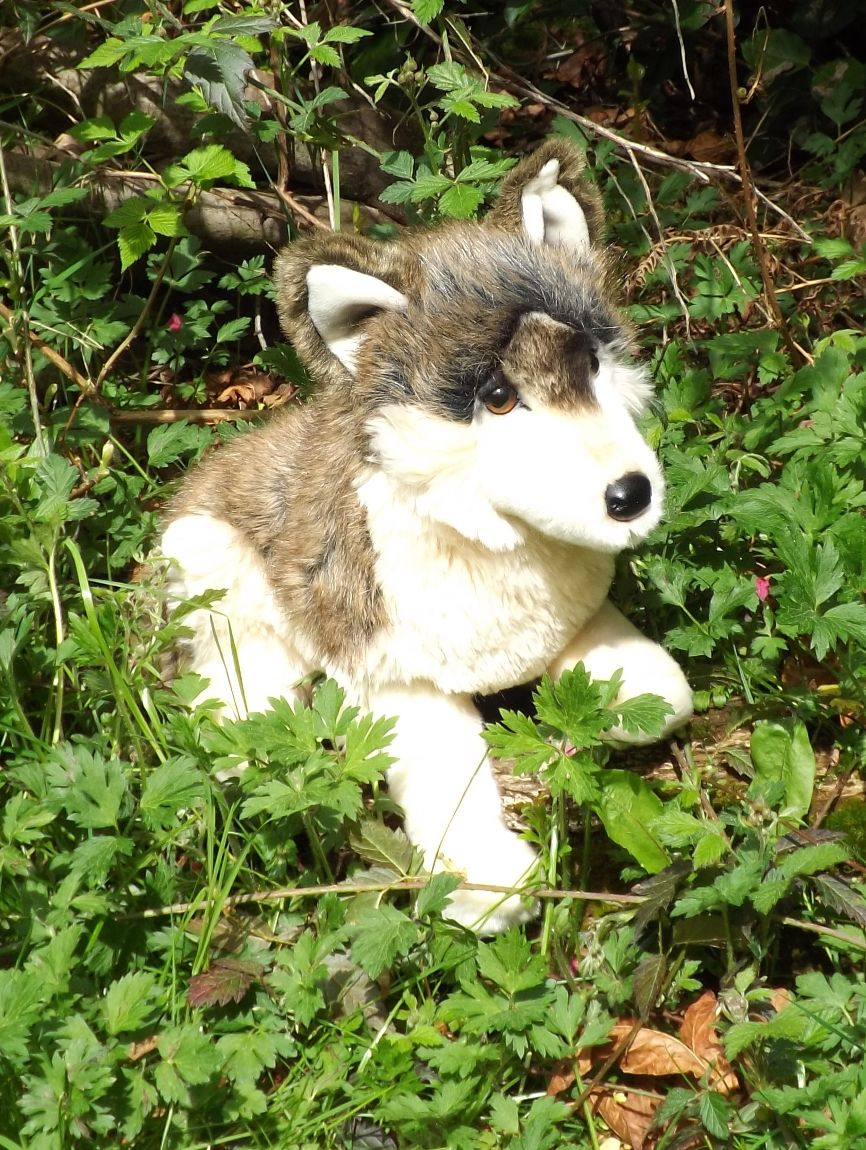 D1845-Stuffed-Toy-Wolf