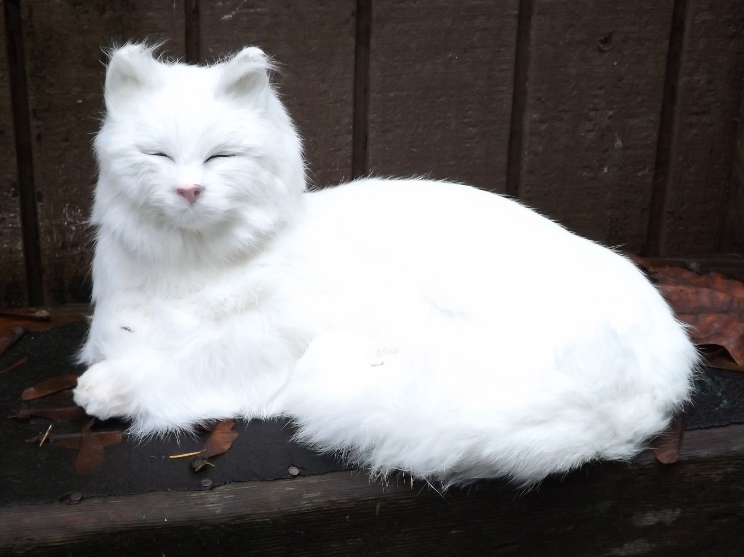 cat with puffed up tail