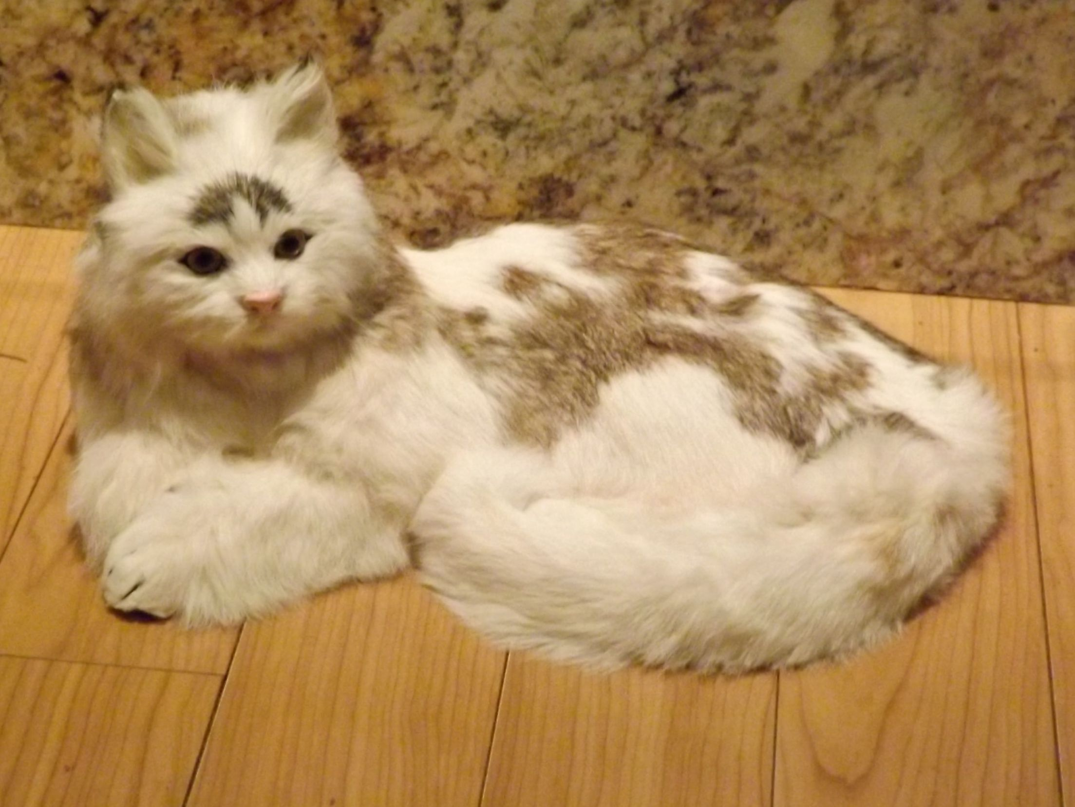 cat not peeing in litter box anymore