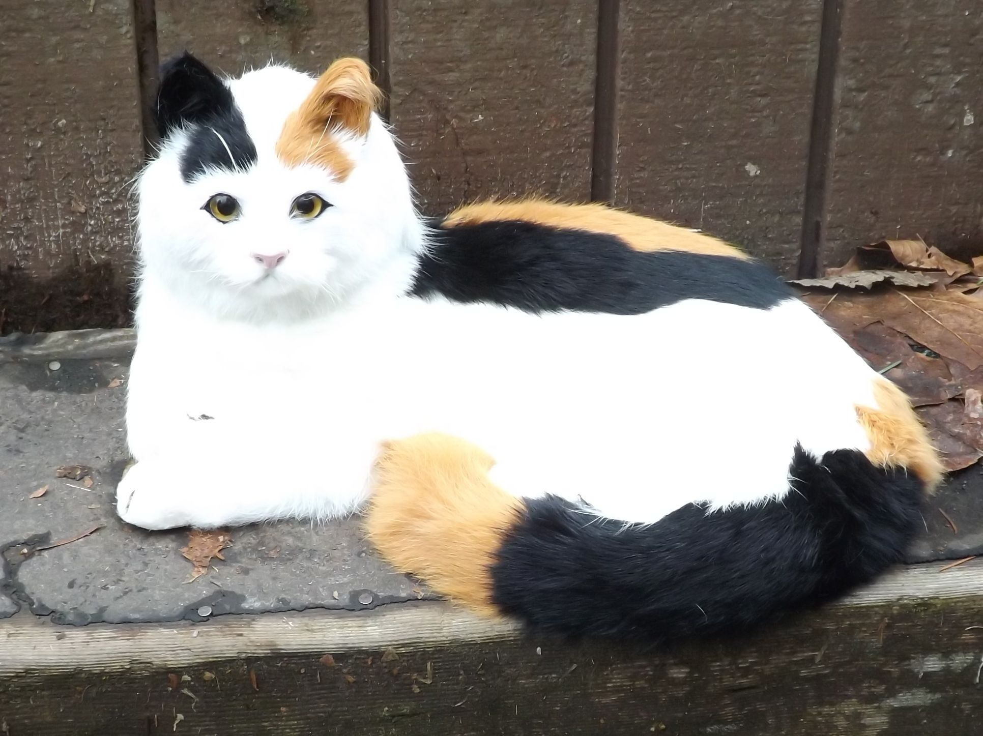GHC231CA-Life-Like-Calico-Display-Cat