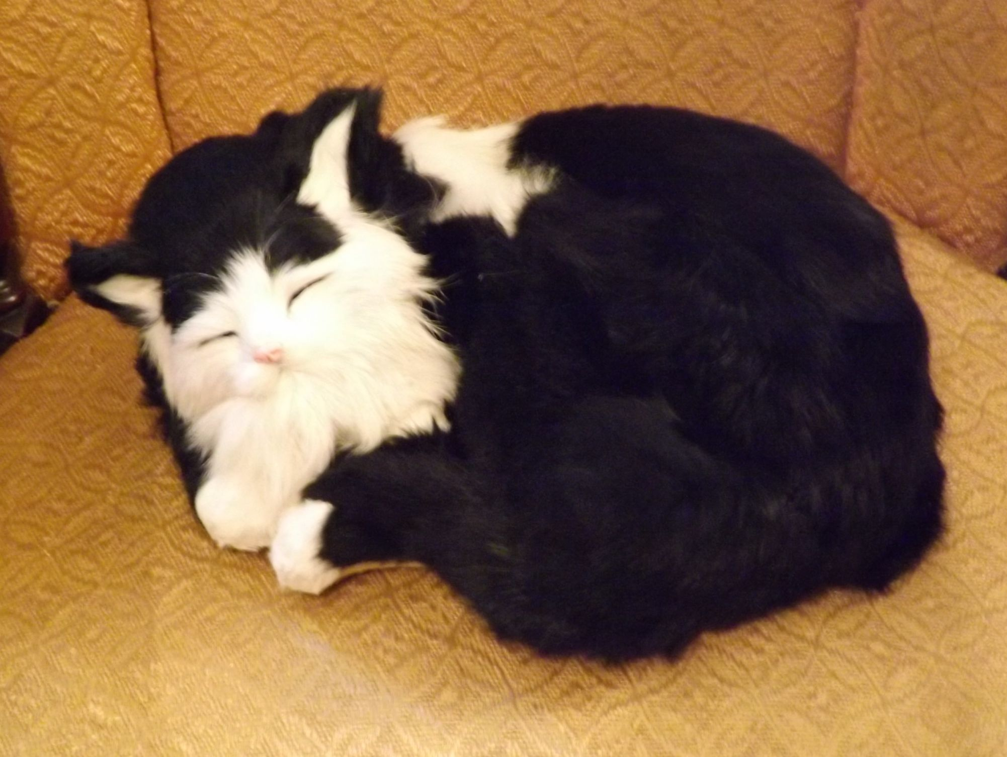 GHC285BL-Realistic-Black-and-White-Sleeping-Cat