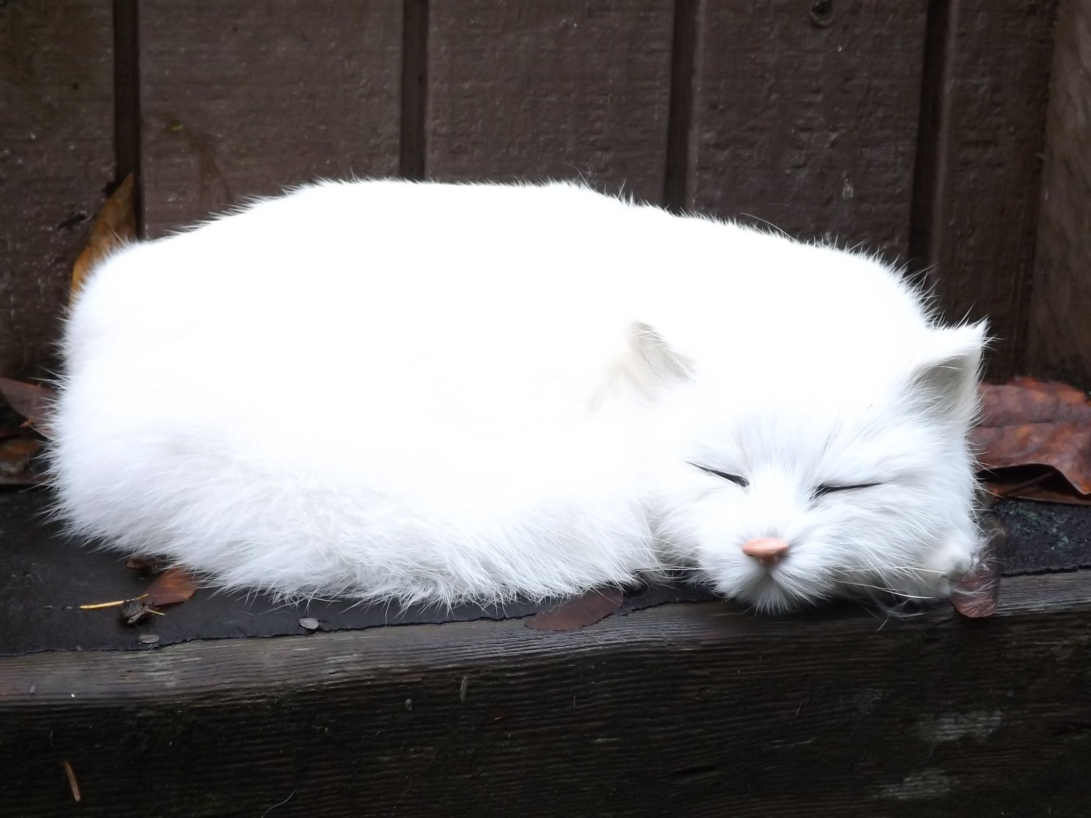 Life Like White Cat – Sleeping Realistic White Cat with Real Fur