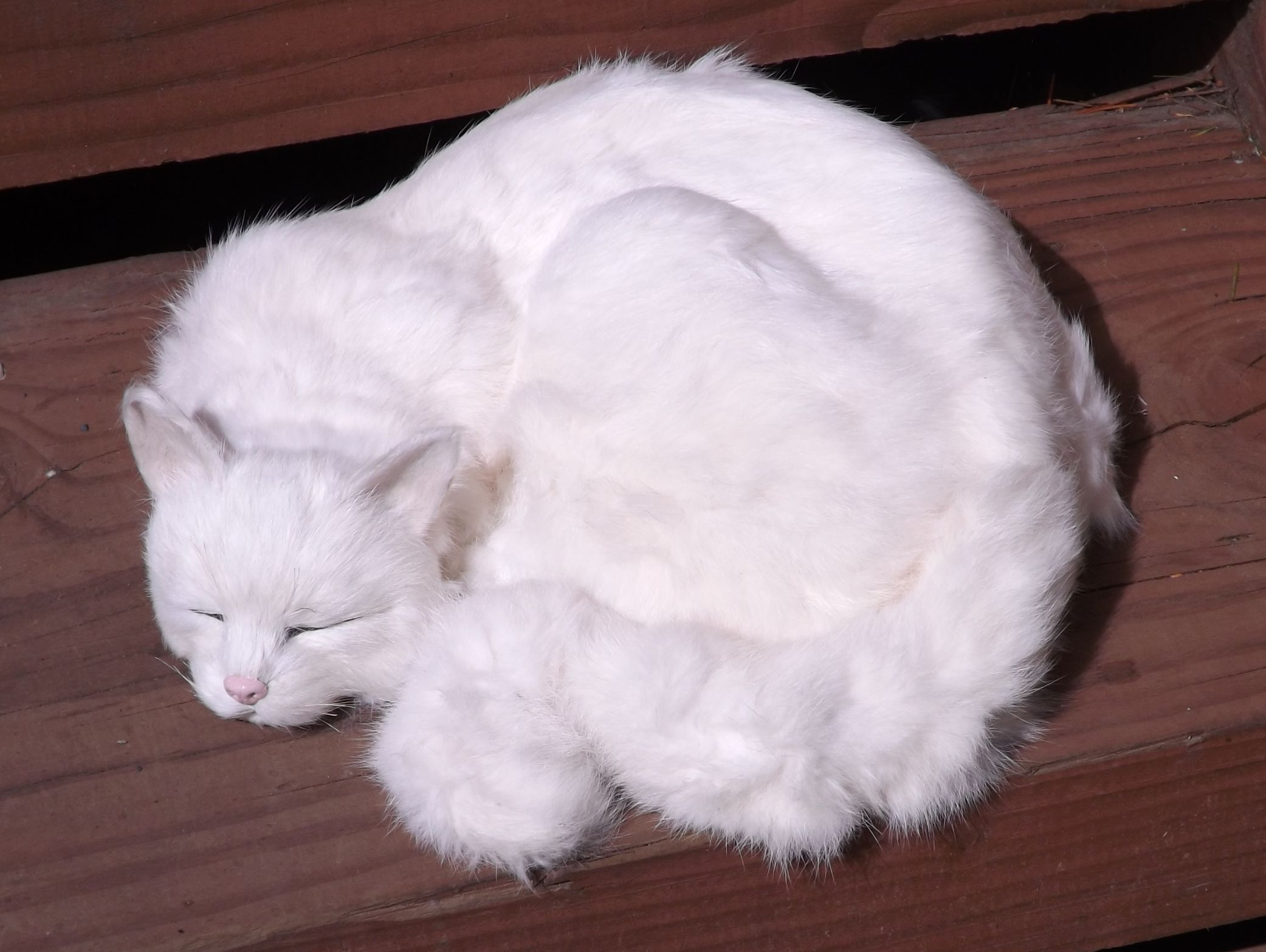 GHC334W-Life-Like-Large-White-Cat-Real-Fur