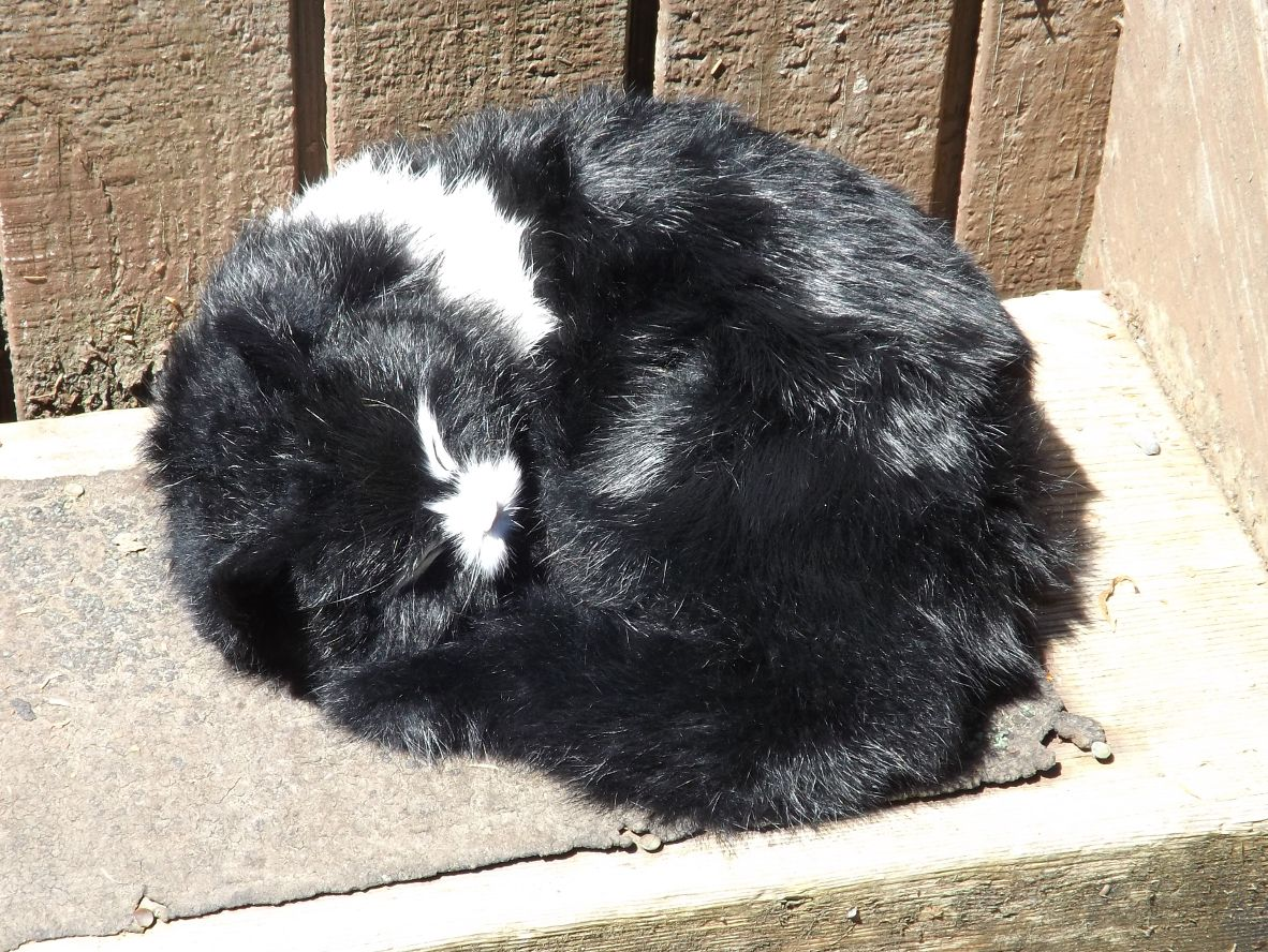 GHC396BL-Sleeping-Realistic-Black-Cat-with-Real-Fur