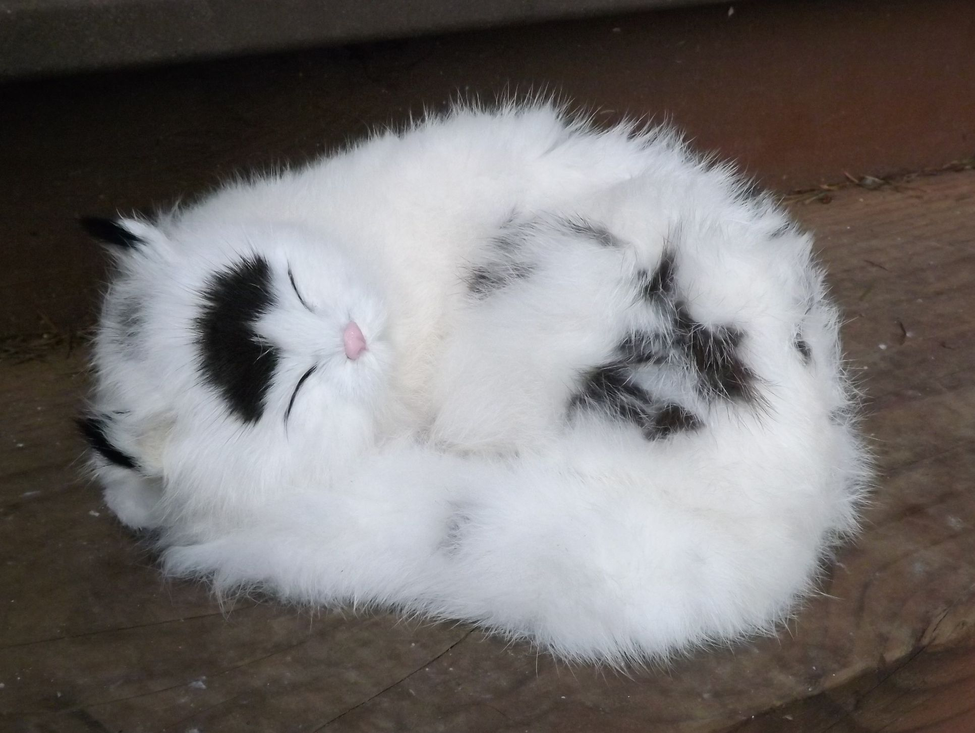 GHC396BW-Life-Like-Sleeping-Cat-with-Real-Fur
