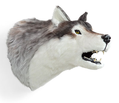 MWT-11-Lifesize-Wolf-Wall-Mount-Head