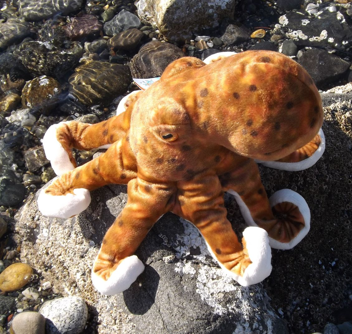 WR10939-CK-Stuffed-Octopus