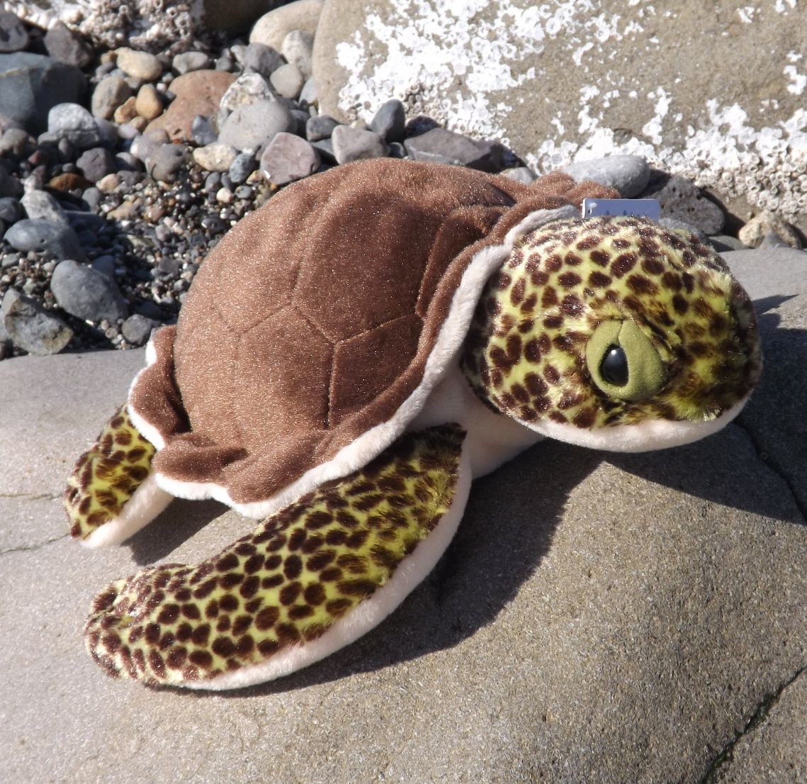 WR10951-Plush-Baby-Sea-Turtle