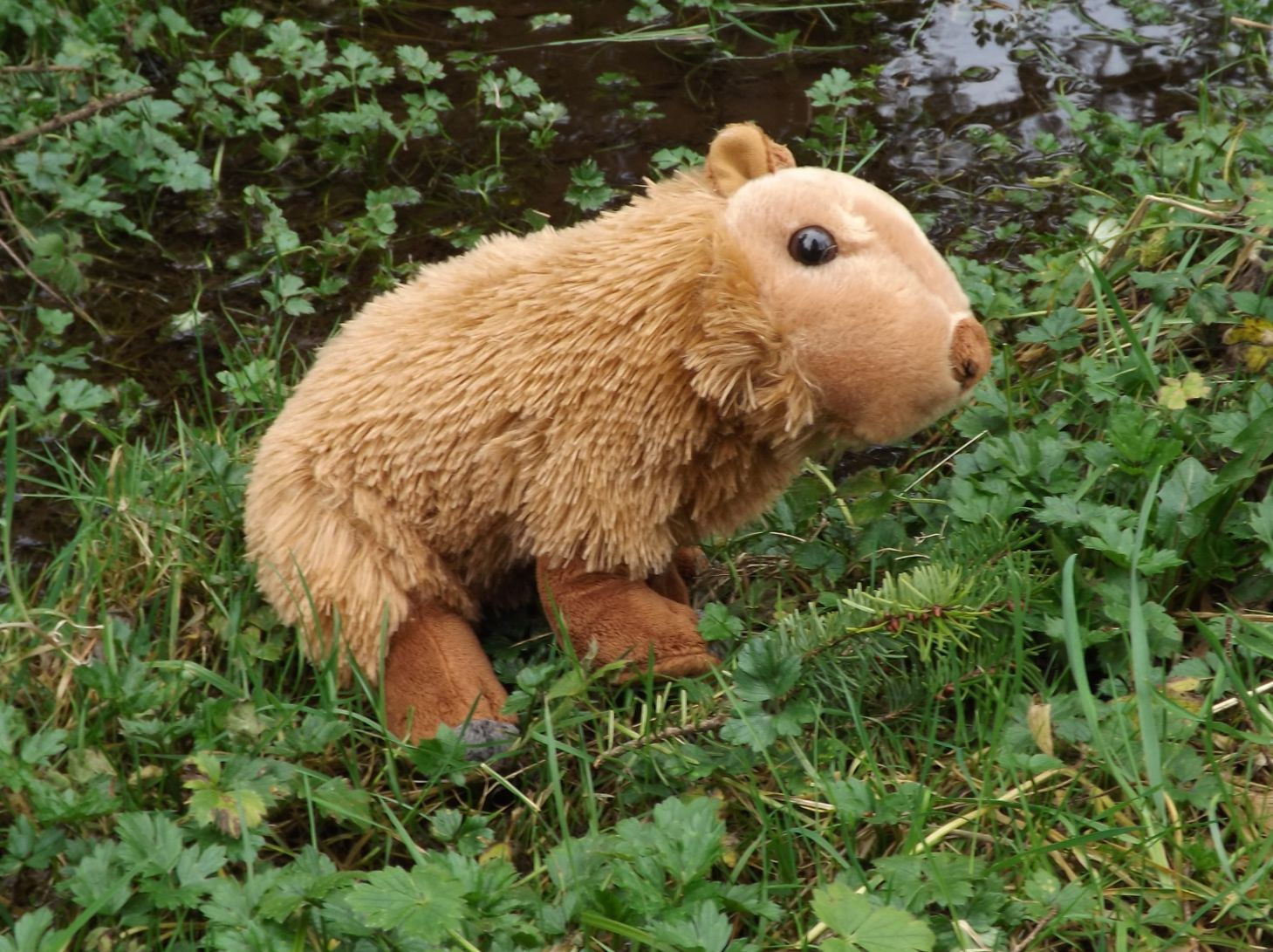 Capybara Stuffed Animal – 12″ Plush Toy Capybara