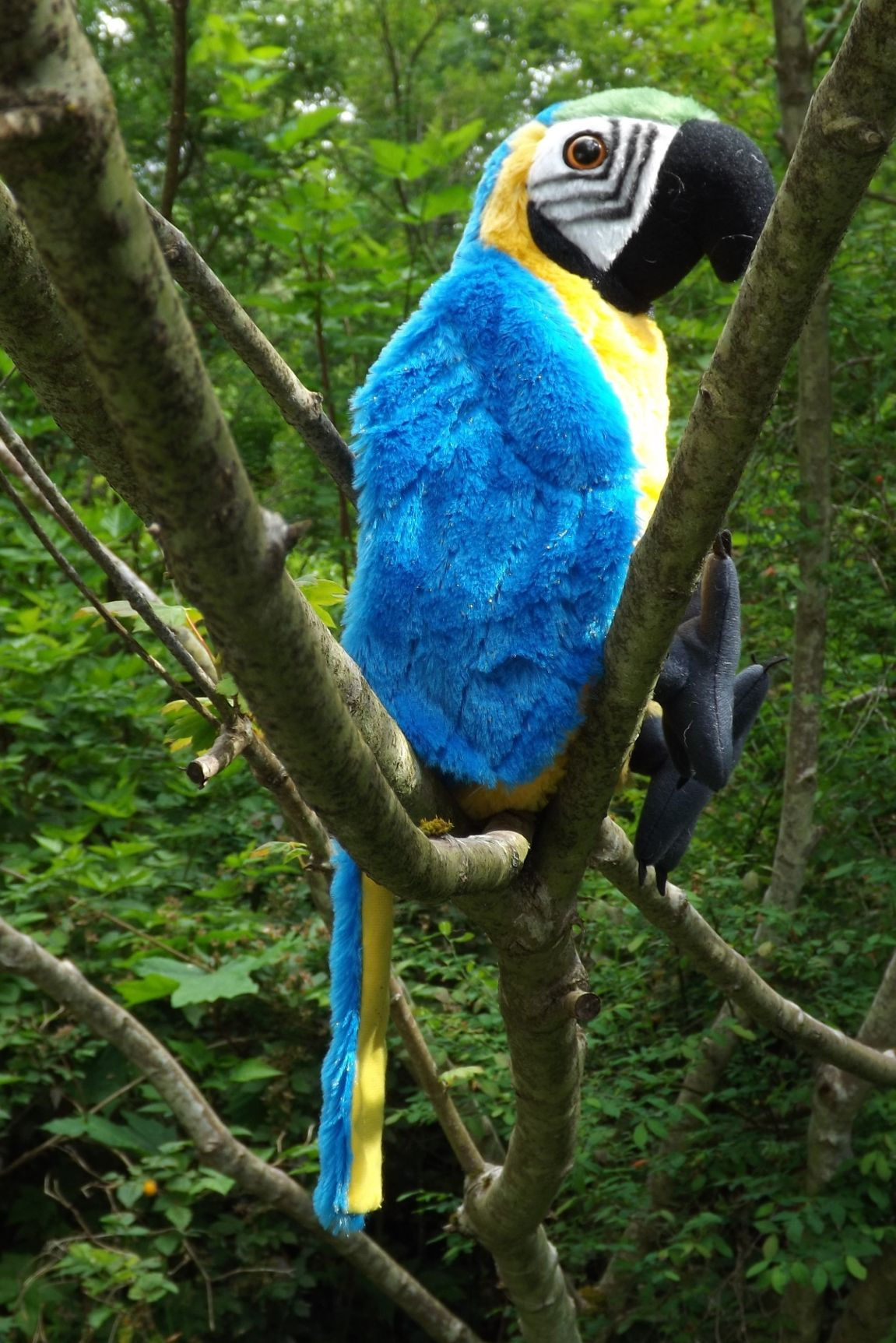 WR12248-Plush-Toy-Macaw-Parrot
