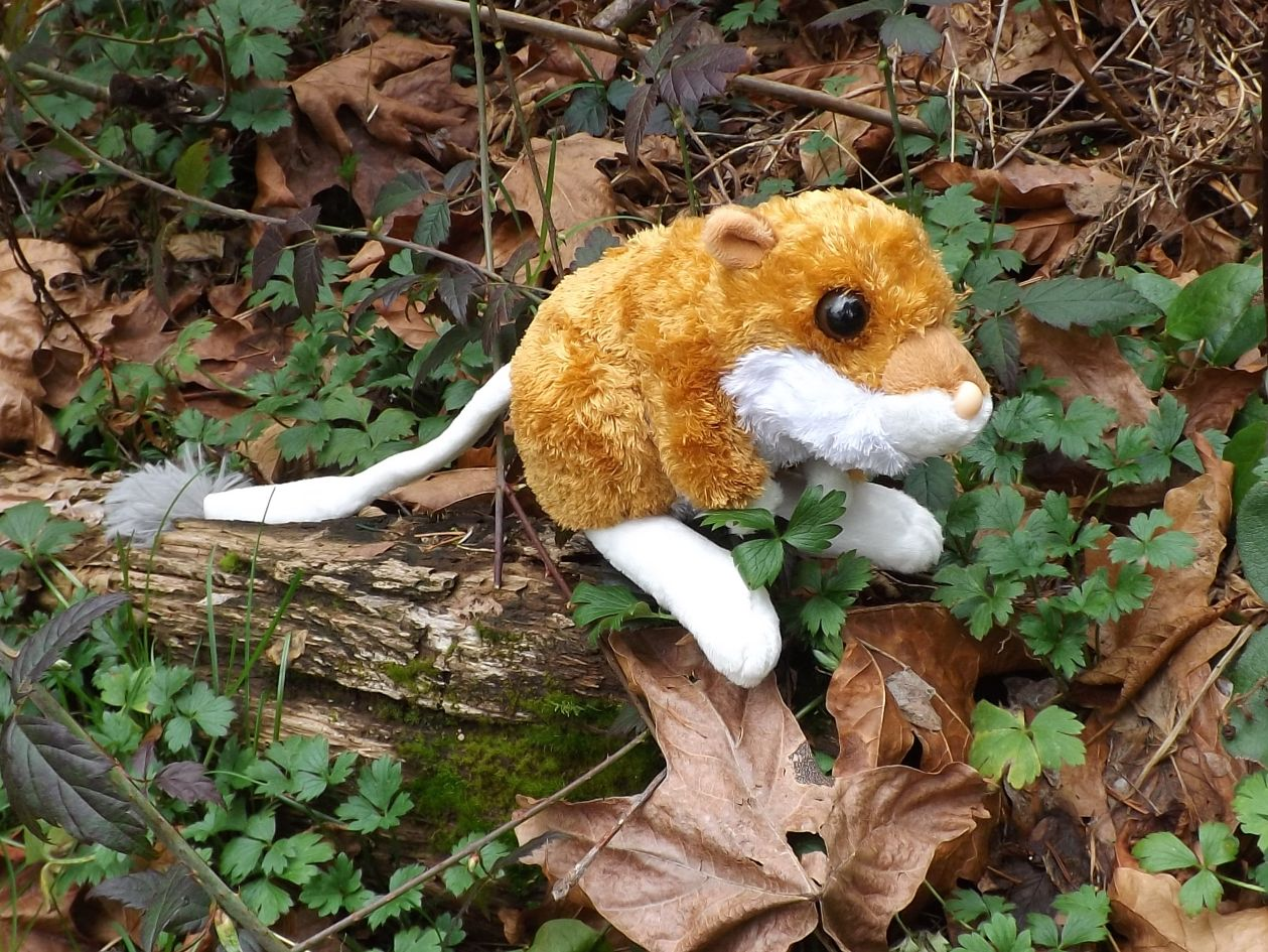 Kangaroo Rat Stuffed Animal 8 Plush Toy Kangaroo Rat