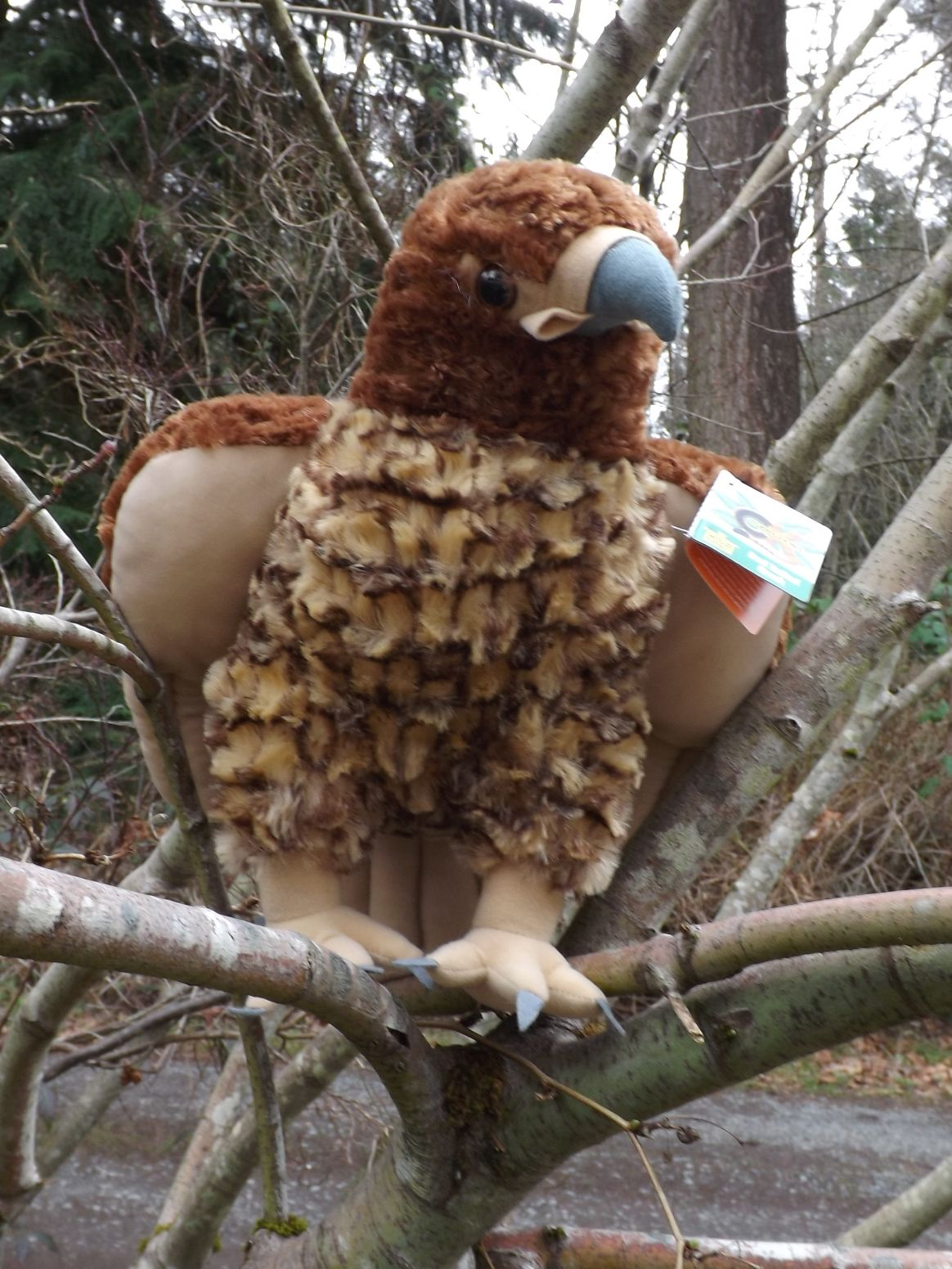 WR12316-Stuffed-Red-Tailed-Hawk