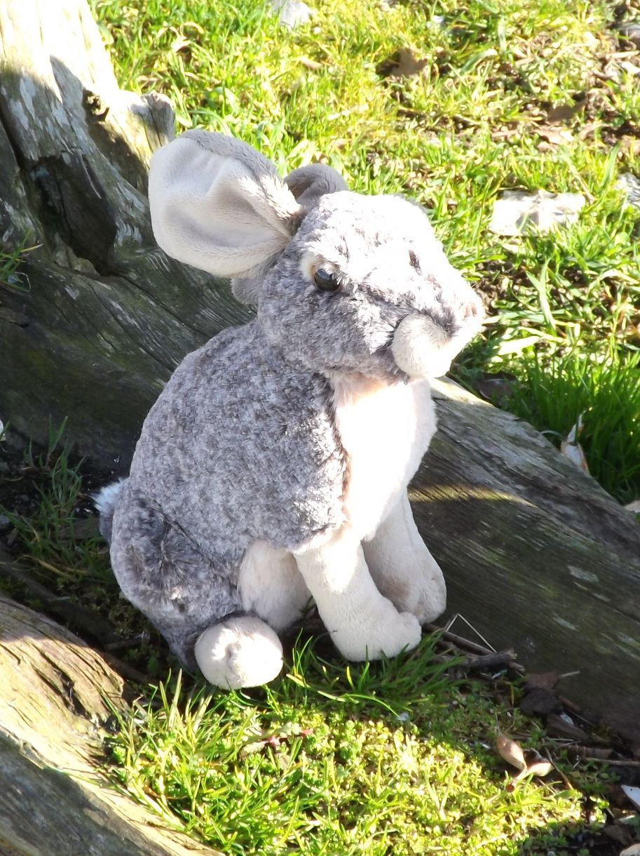 WR13464-Stuffed-Toy-Hare-Rabbit