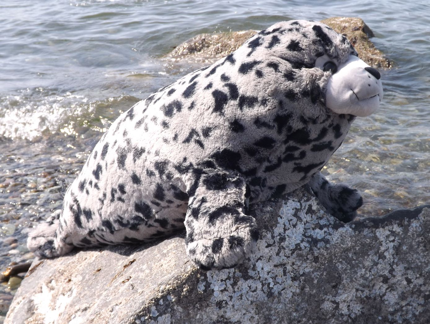 WR16487-Large-Harbor-Seal-Pup-Stuffed-Animal