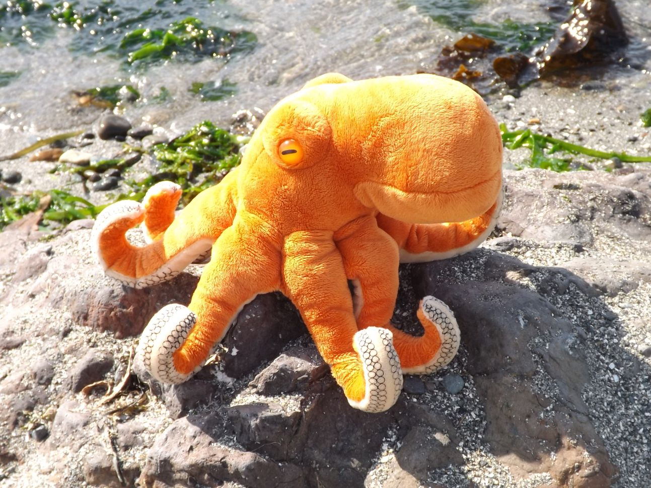 Z3827-Octopus-Plush-Toy-Animal
