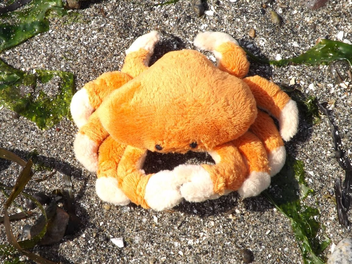 Dungeness crab stuffed toy animal