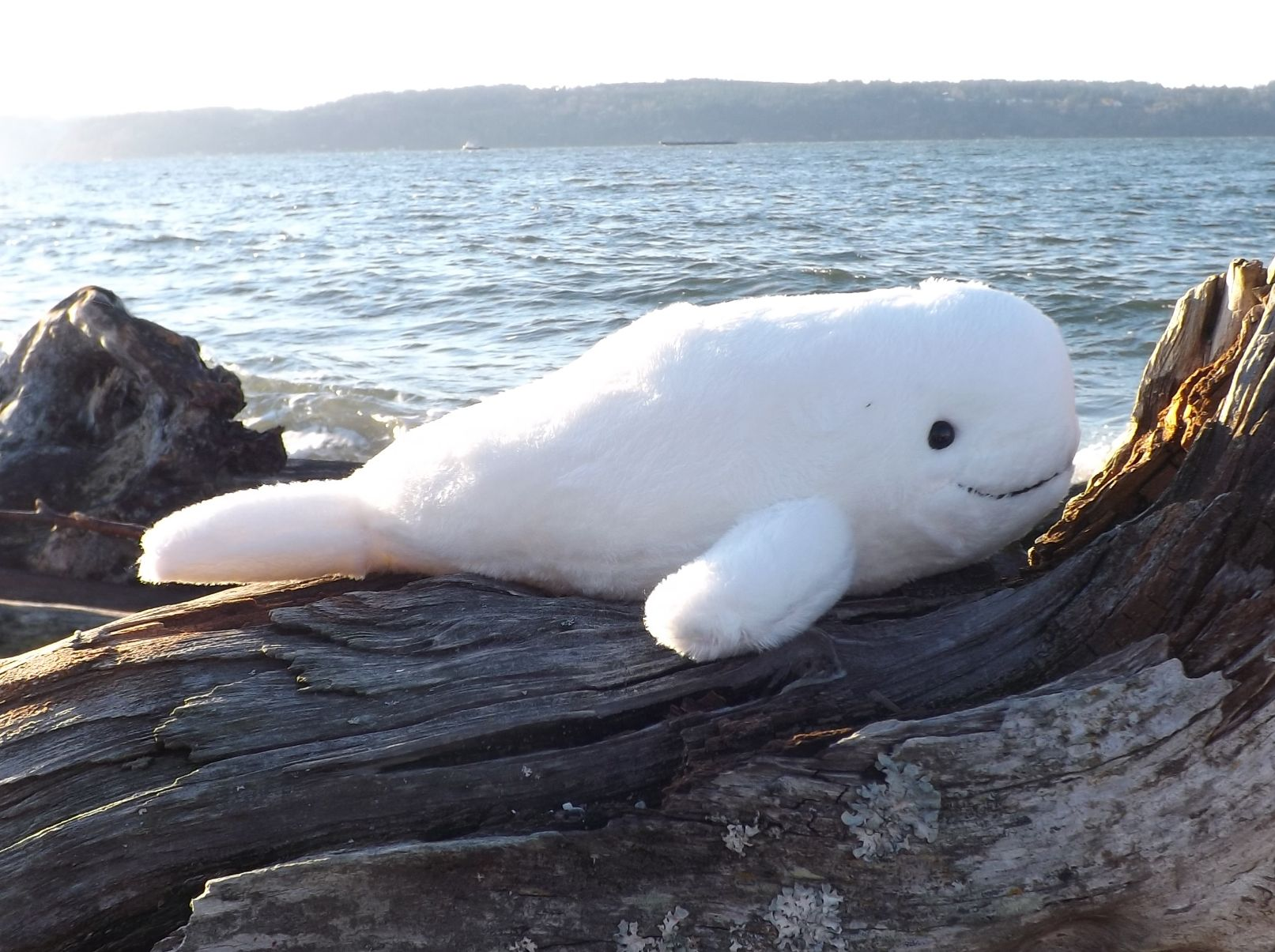 Z3841-Beluga-Whale-Plush-Toy-Animal