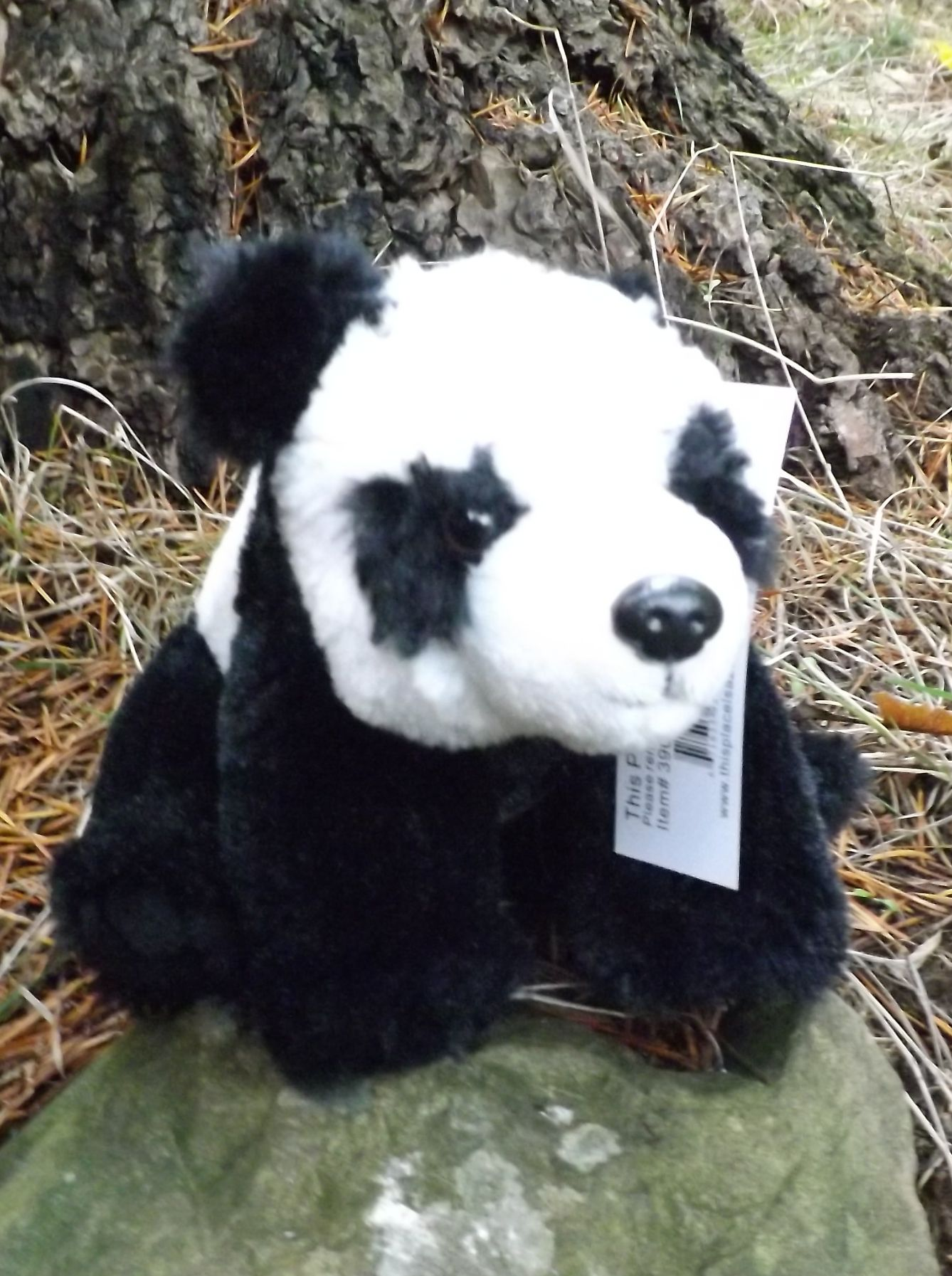 Z3900-Small-Plush-Toy-Panda-Bear-7