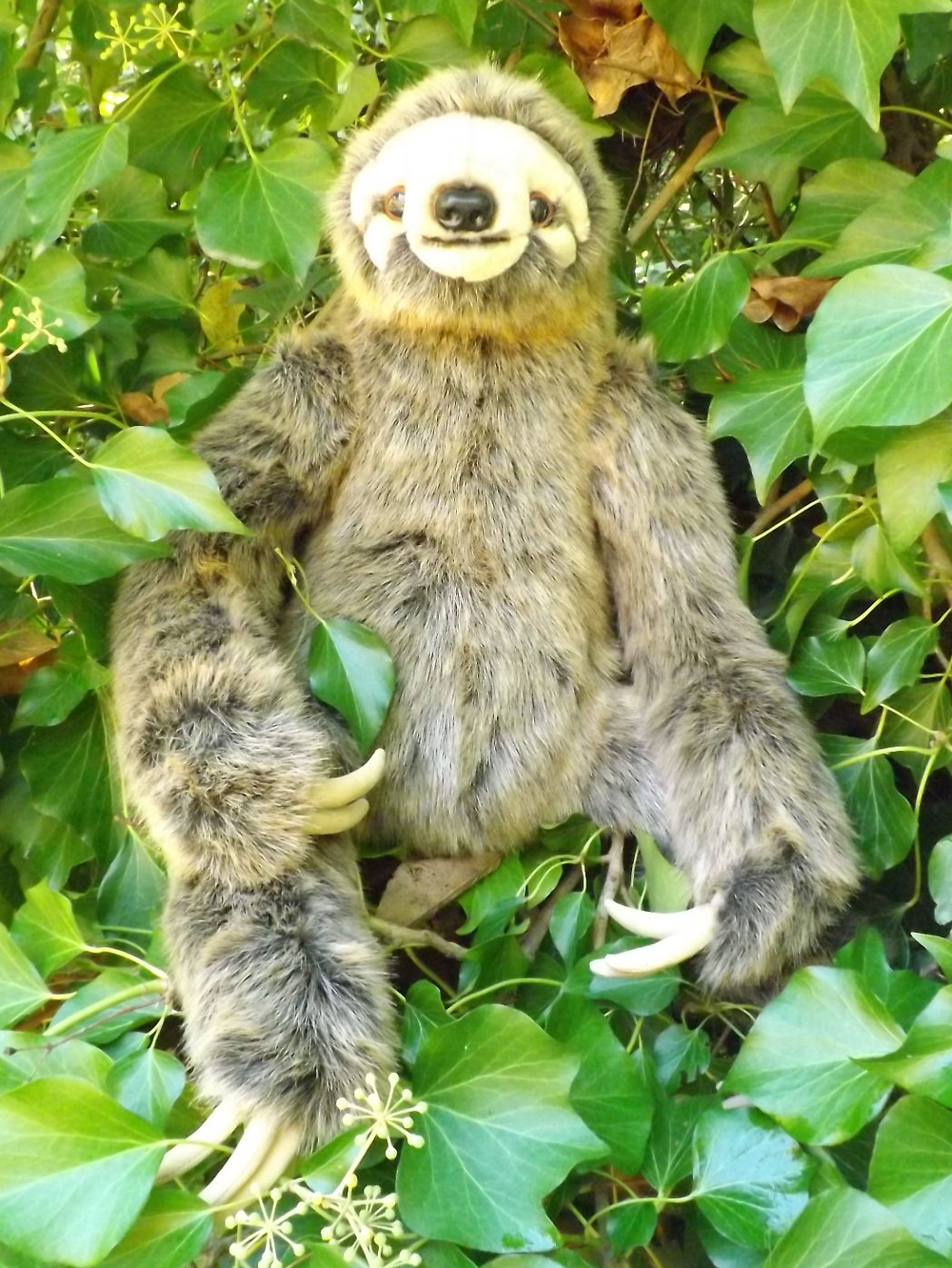 Z4017-Large-Stuffed-Animal-Sloth-24