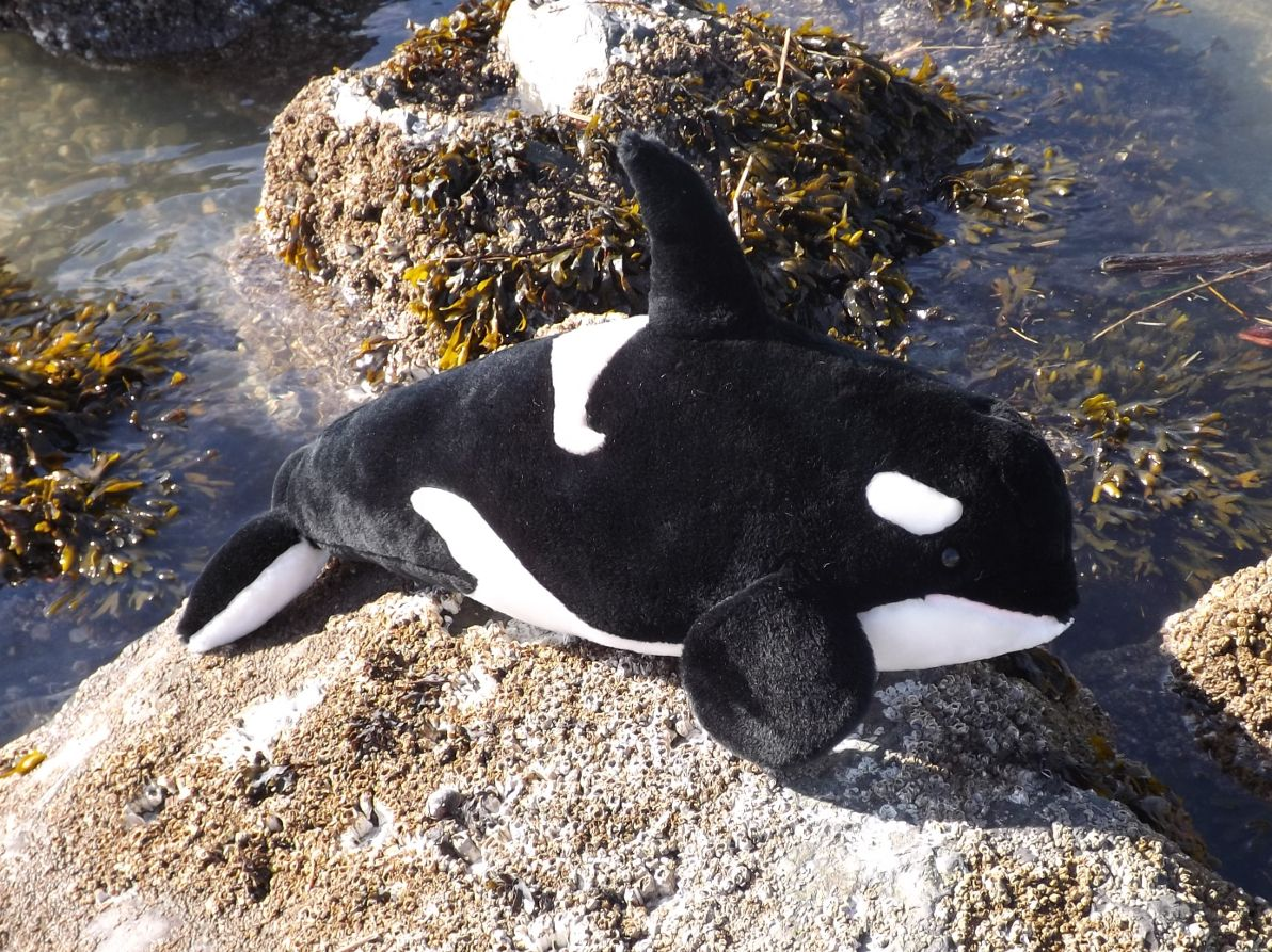 Z4073-Killer-Whale-Stuffed-Animal