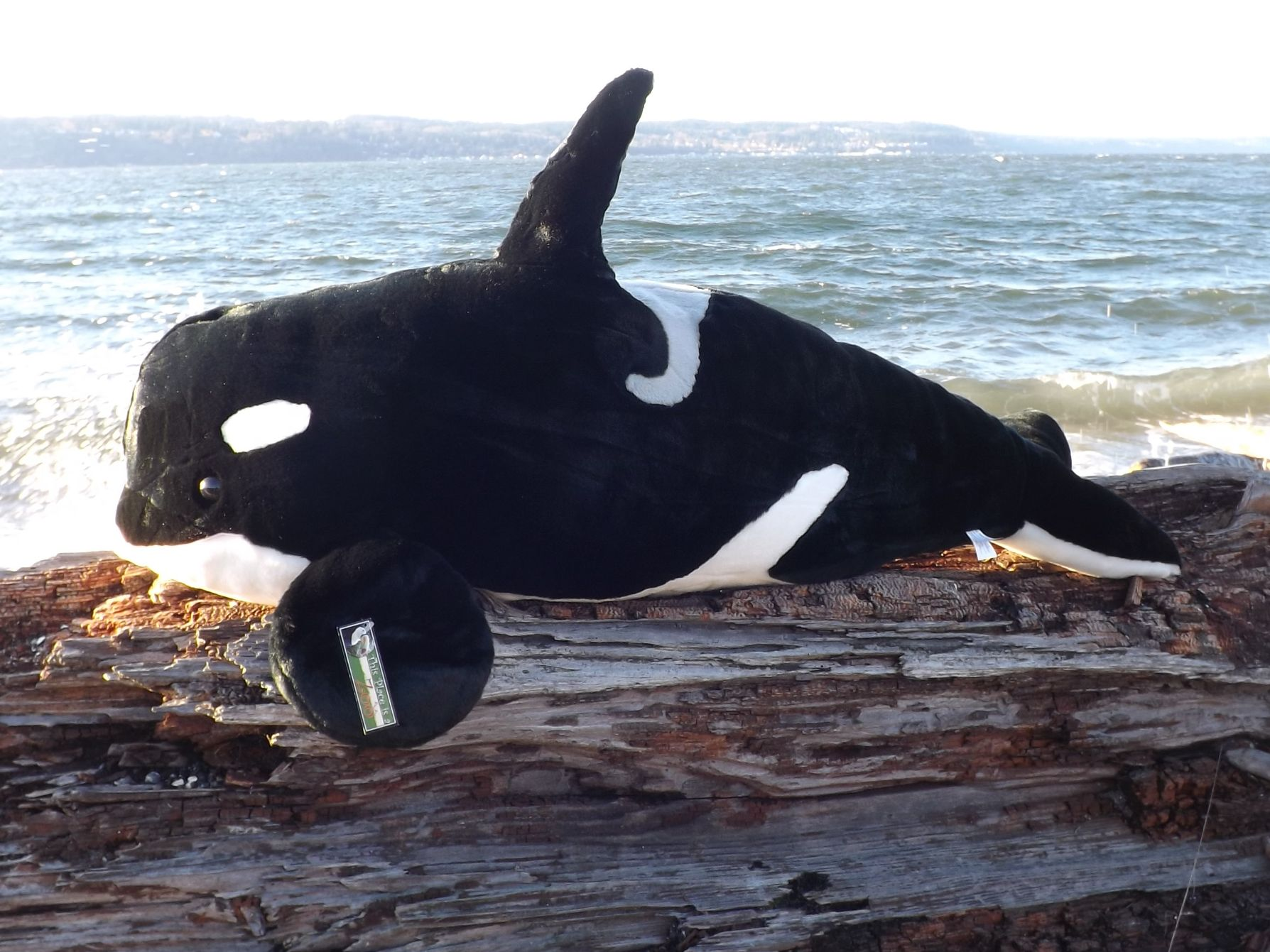 Z4074-Large-Stuffed-Killer-Whale-32