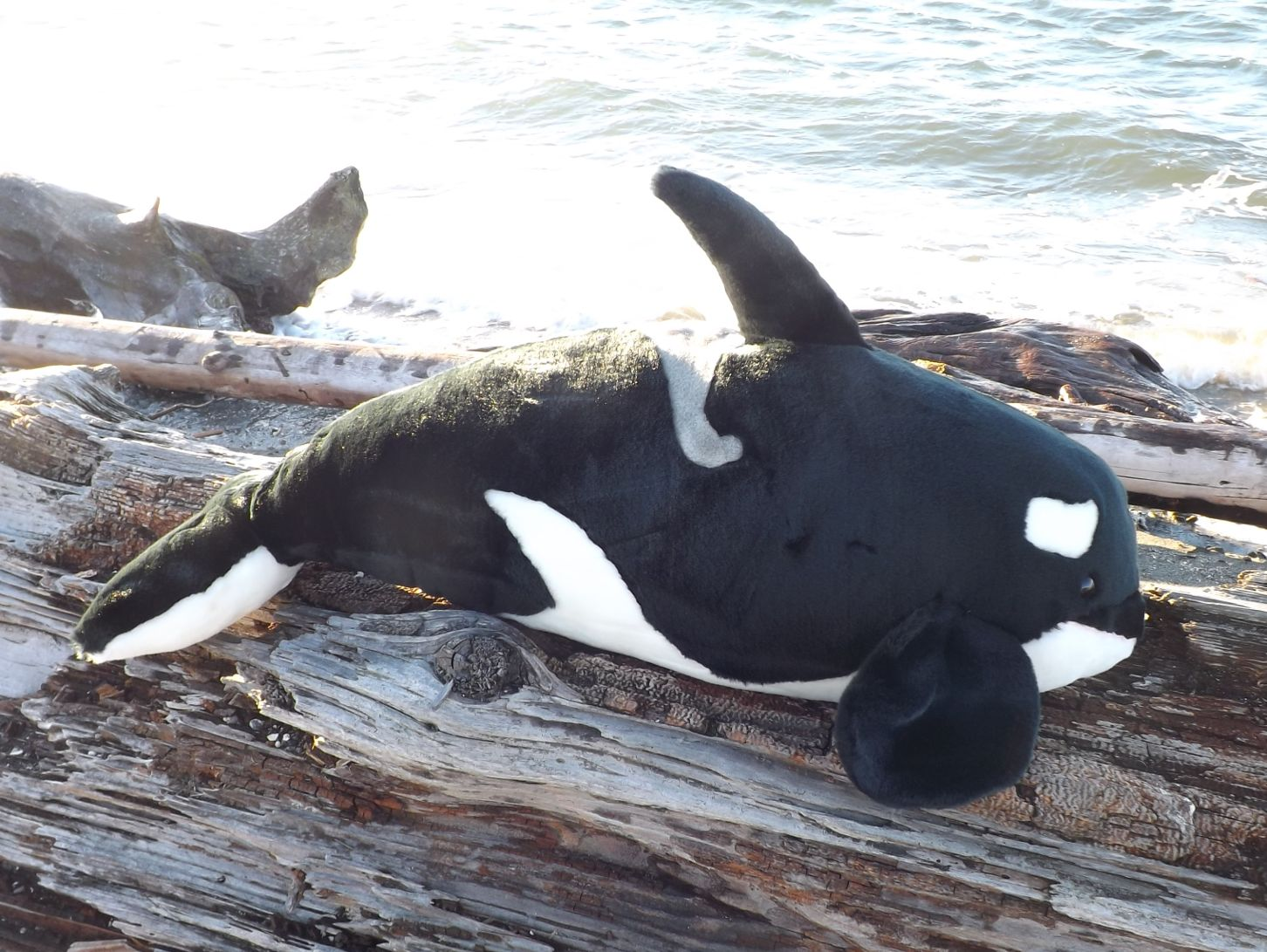 Z4075-Huge-Stuffed-Orca-Whale-40