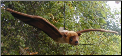 Stuffed Flying Foxes and Bats
