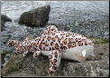 Stuffed Leopard Sharks