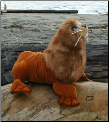 Stuffed Sea Lions