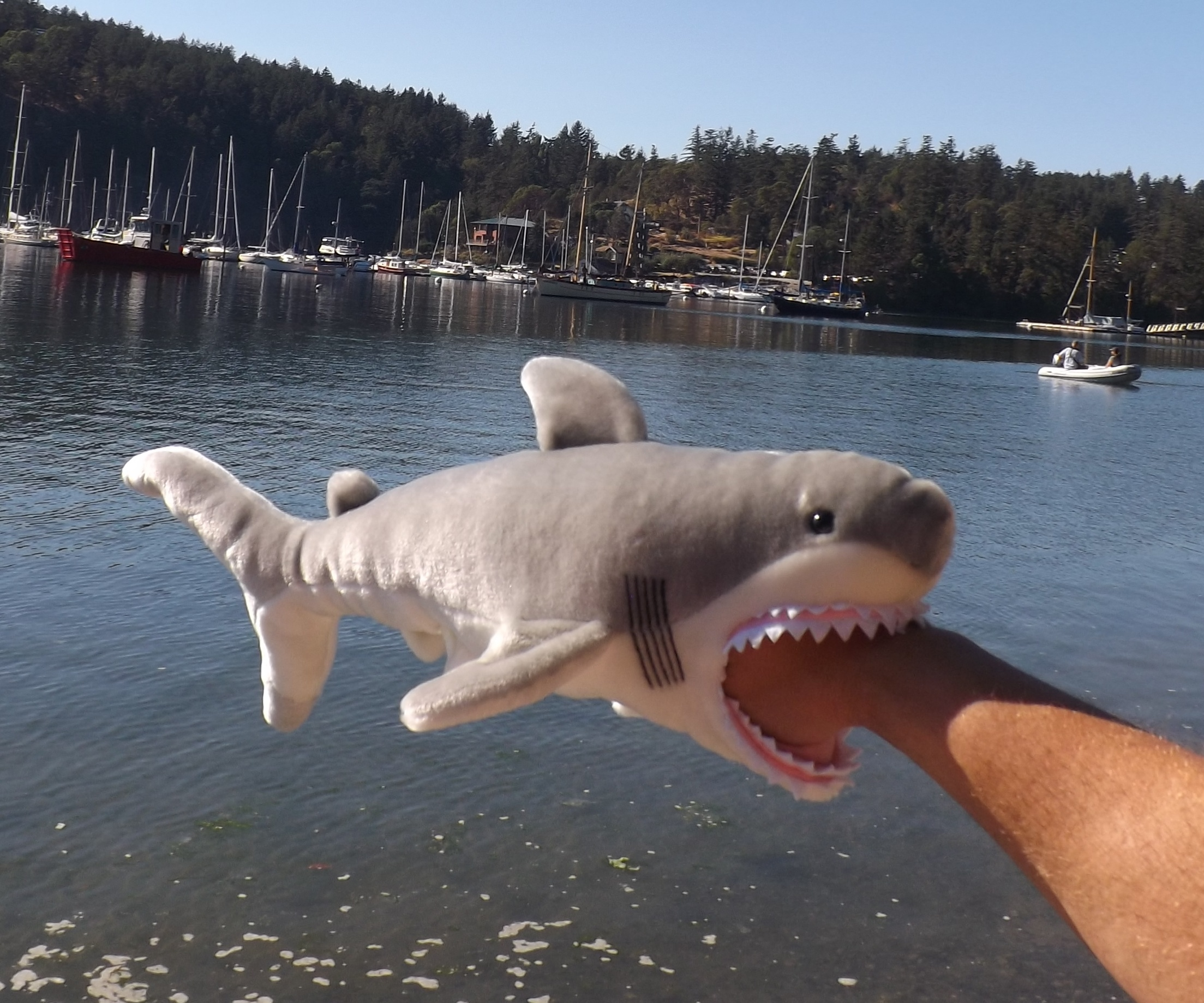 toy stuffed shark