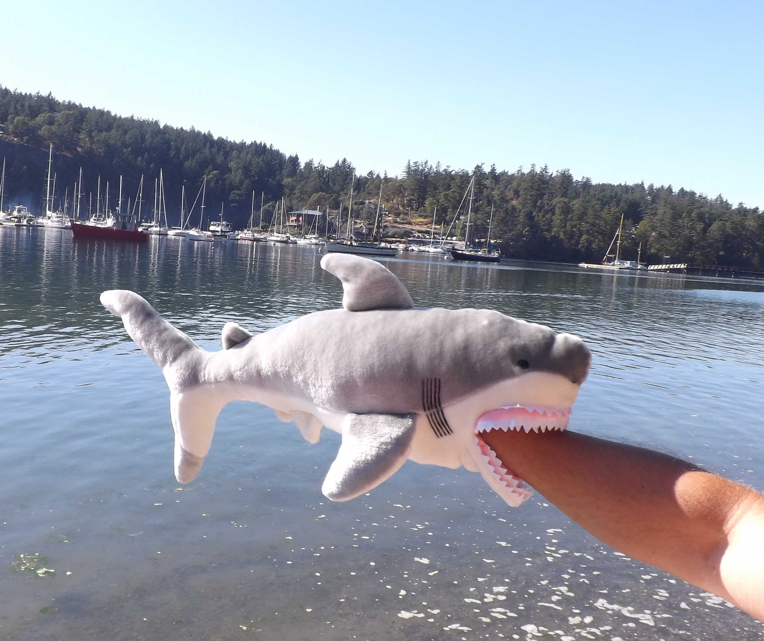 Chomp Stuffed Animal Great White Shark 24